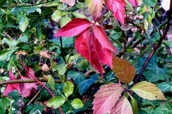 m06---Des-feuilles.JPG