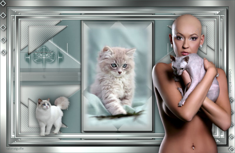 *** Mes tendres chatons ***