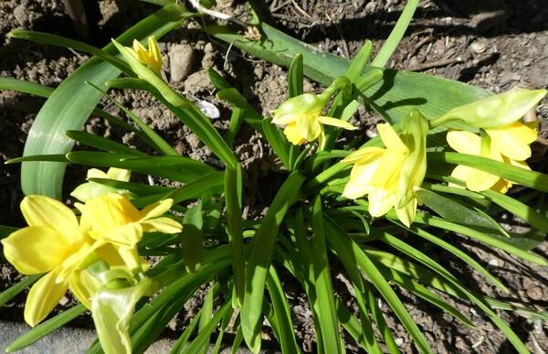 Couleurs printemps