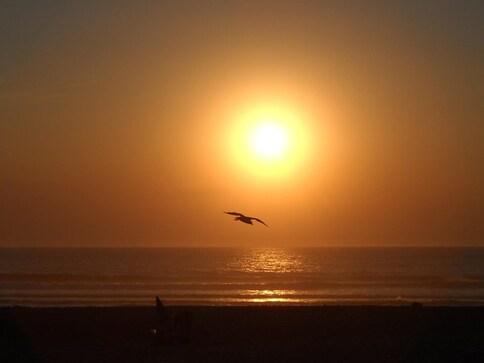 Oiseau marin au soleil couchant