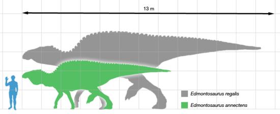 edmontosaurus_scale