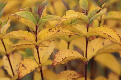 Fin novembre au jardin