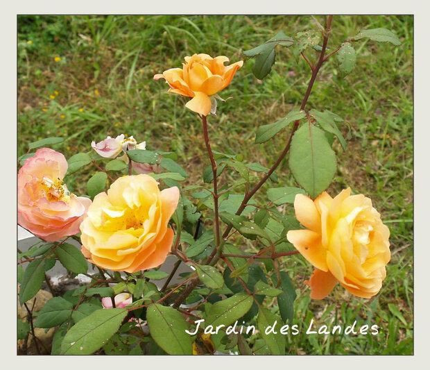 le  jardin en juillet 2018 - (2)