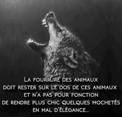 Images animaux en danger