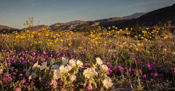 Les collines du désert d'Anza-Borrego situé dans le sud de la Californie recouvertes