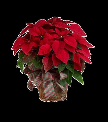 pour un joli Noël !  2