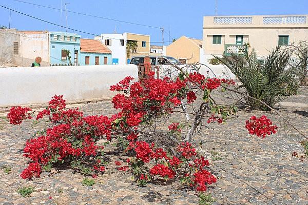 boa vista, l'est de l'île, village Cabeça de Tarefes8