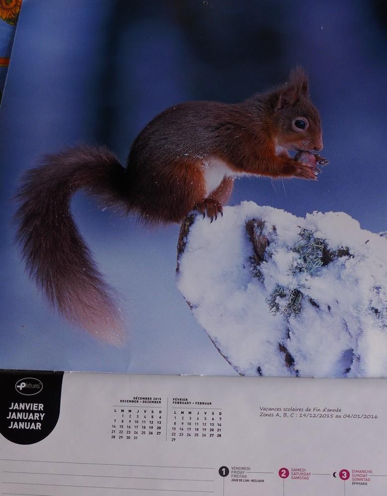 L'écureuil frileux de janvier...