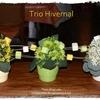 Trio hivernal