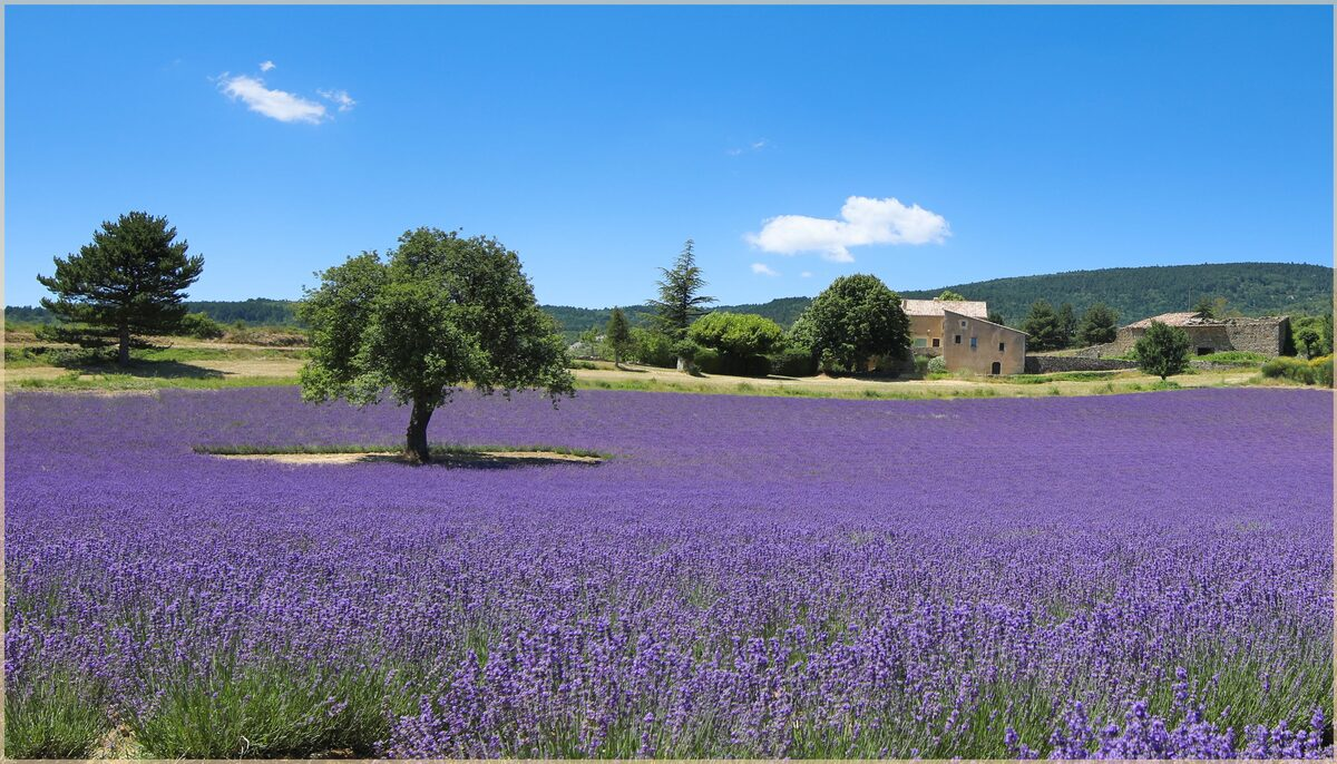 Objectif Provence .