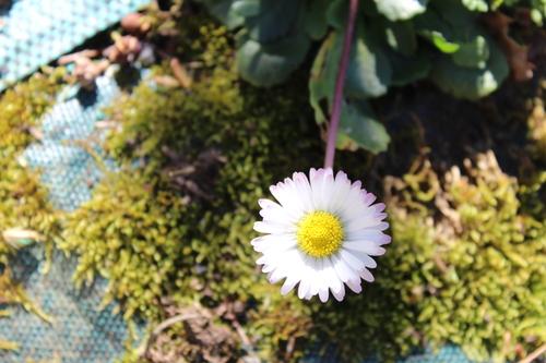 Les beautés du printemps