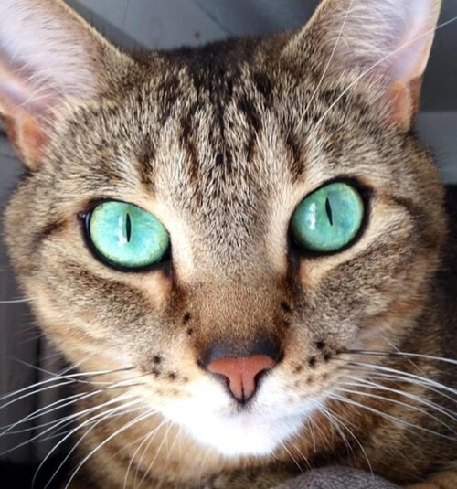 15 chats aux yeux magnifiques