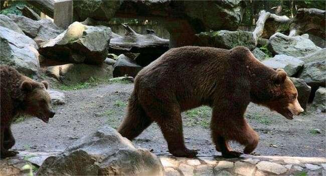 Chine. Des ours tuent un homme dans un zoo, sous le regard impuissant de touristes