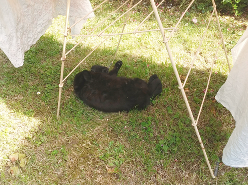 La sieste des chats / Cats ' rest