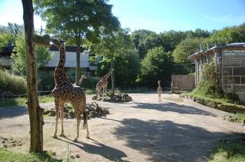 Zoo Duisburg 2012 600