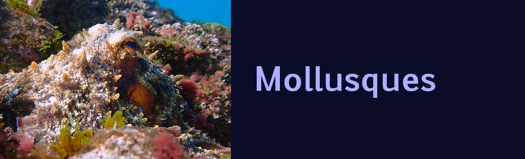 http://ekladata.com/EPRAGZdwBrRYKCzC9gEa10CXR3I/banniere-cephalopodes-Mediterranees.png