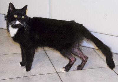 Chaussette, chat miraculé  des égouts