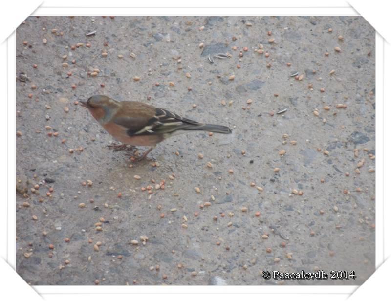 """Les oiseaux de """"mon"""" chemin - 5/9"""