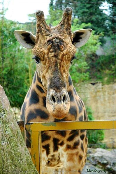 Zoo-Douai 0940