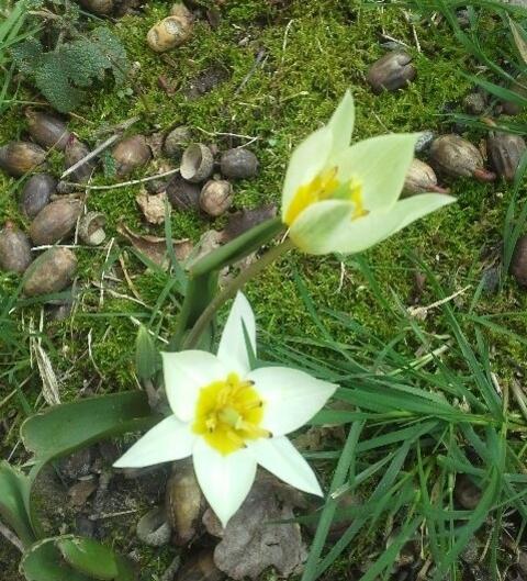 Bonjour, le printemps !