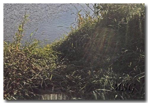 Petit matin sur la Loire - Dawn over la Loire