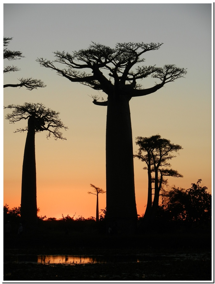 Couché de soleil sur les Baobabs
