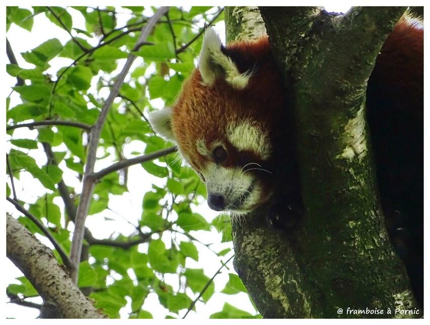 LYON Jardin zoologique et animaux du parc de la Tête d'Or