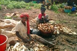 Peeling the cassava