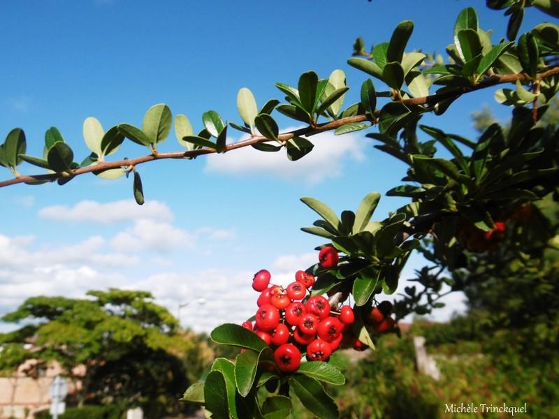 Une autre balade fleurie dans mon village, le 22 septembre (suite)...