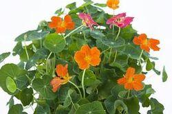 Une glace aux fleurs