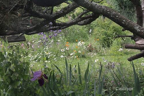 """Le jardin, côté """"champêtre"""" ..."""