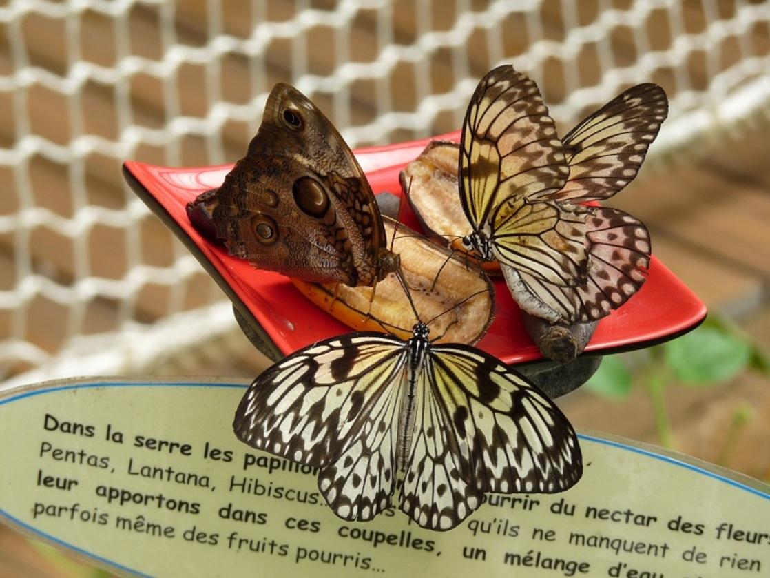 Le jardin aux papillons à Vannes