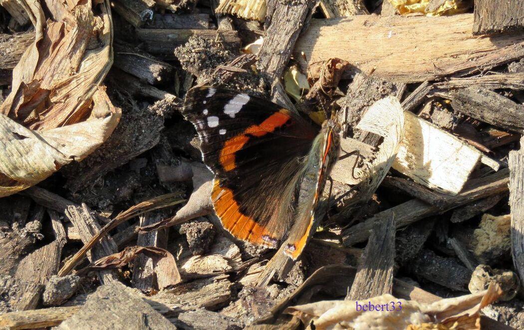 un papillon cet été