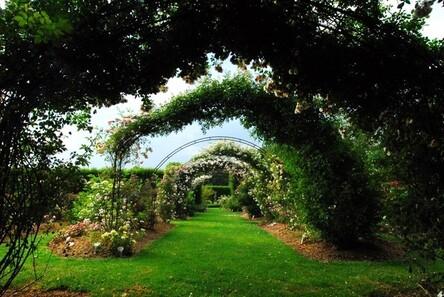 Le jardin conservatoire de roses créé en 1990