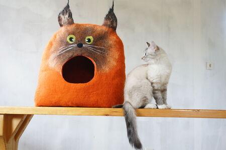 Des abris douillets en forme de chat