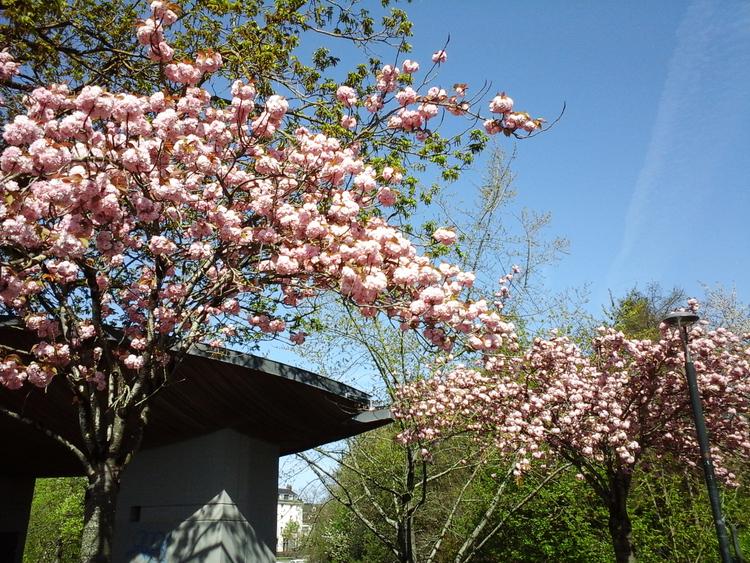 Jardin japonais à l'île Versailles de Nantes (2)