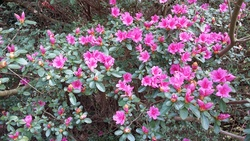 parc floral - petites fleurs