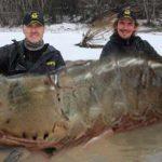 Des pêcheurs canadiens ont capturé une crevette géante de 145 kilos