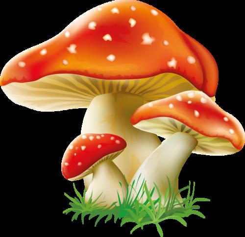 tubes champignons / feuillages Ecrire un nouvel article