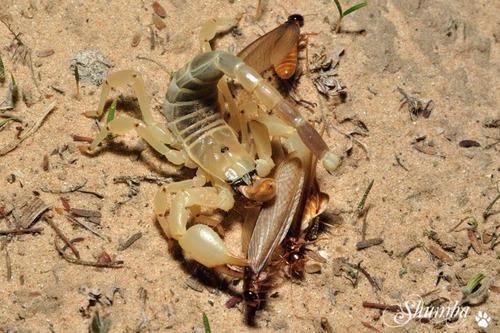 Termite frenzy