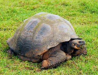 tortue-terrestre5.jpg