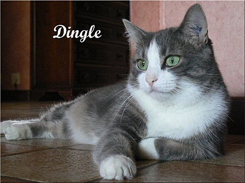 P1000471-dingle-de-nicole-tyssen.JPG
