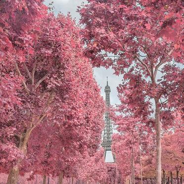 Paris, nouvelle ville rose ...