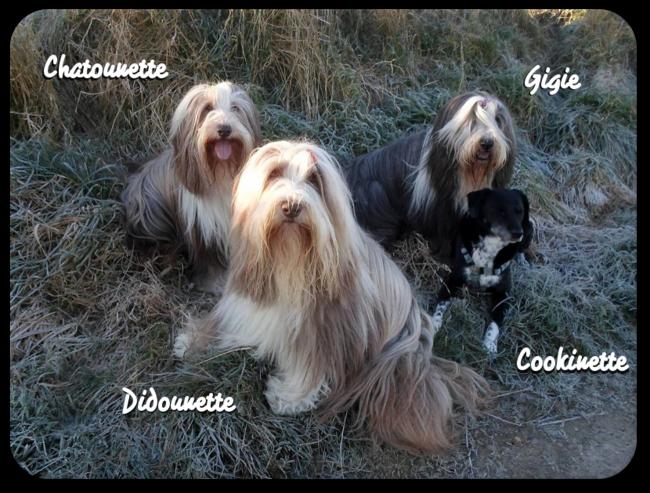 ♥ Joyeux anniv Didounette ♥ d' Athos & Cheyenne