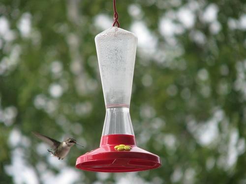 Le colibri est arrivé