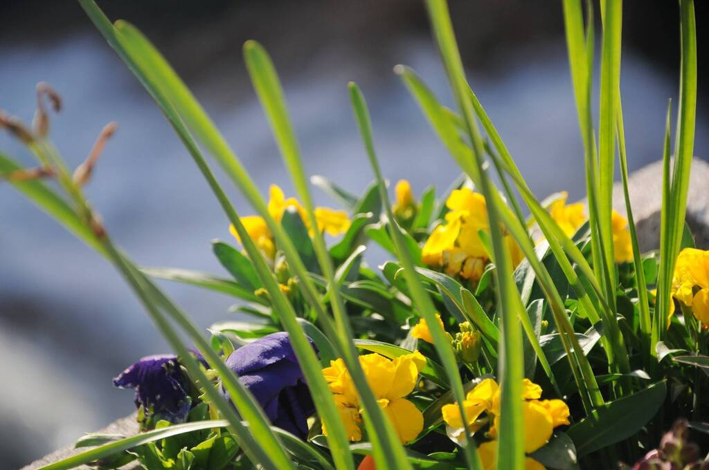 Fleurs en bordure de la cascade de Trans!
