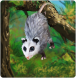 opossum_card
