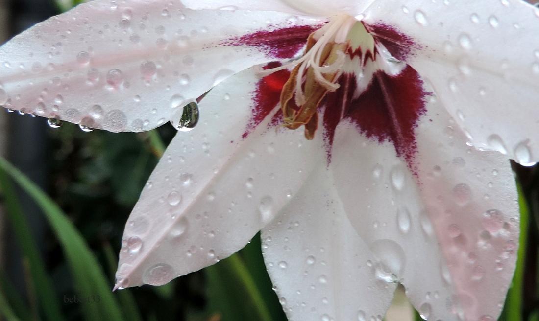 des gouttelettes sur une fleur