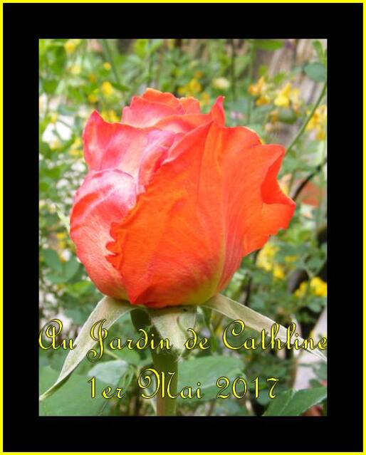 Balade au jardin et Jardiner avec la lune du 1er au 10 Juin