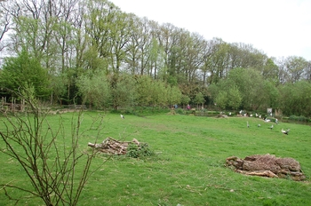 Naturzoo Rheine d50 2012 024